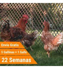 Oferta 5 bignee + Gallo + Portes Incluidos