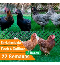 Pack 6 Gallinas 3 Razas Superponedoras