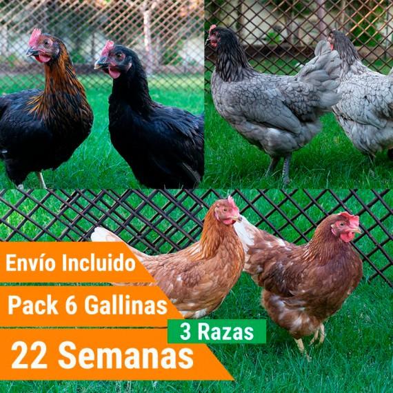 Pack 6 Gallinas 3 Razas Superponedoras