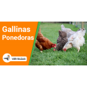 Gallinas Ponedoras