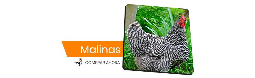Malinas
